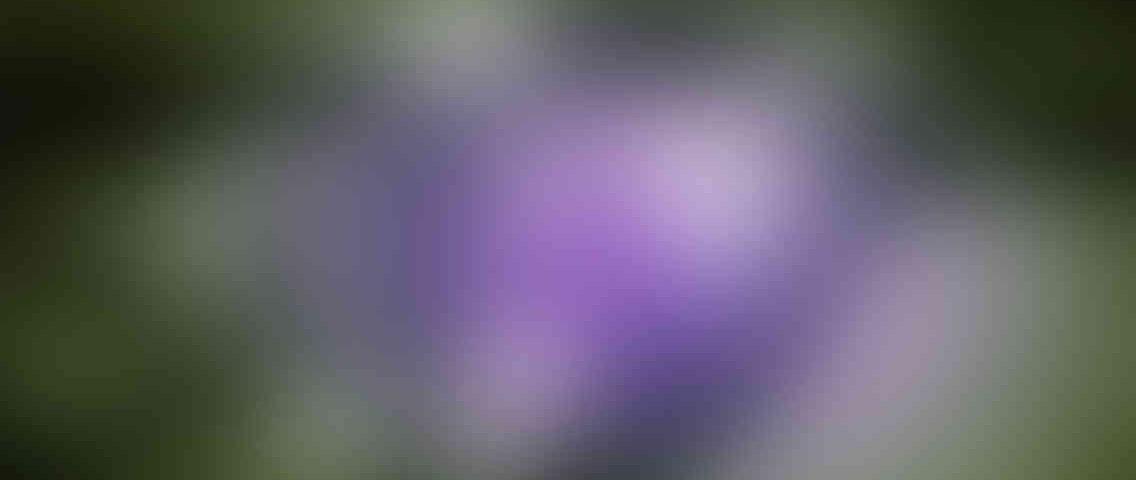 http://www.jasawebjakarta.com/wp-content/uploads/2013/03/standout_slide_3_v01-1136x480.jpg